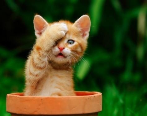Cute-kitten-in-a-pot