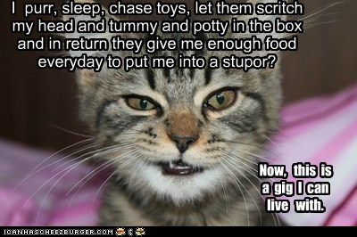 Kitteh Snarky Sarcastic Bish Meme filled in by meh sarcastickirby ~! snarky sarcastic bish wordpress com